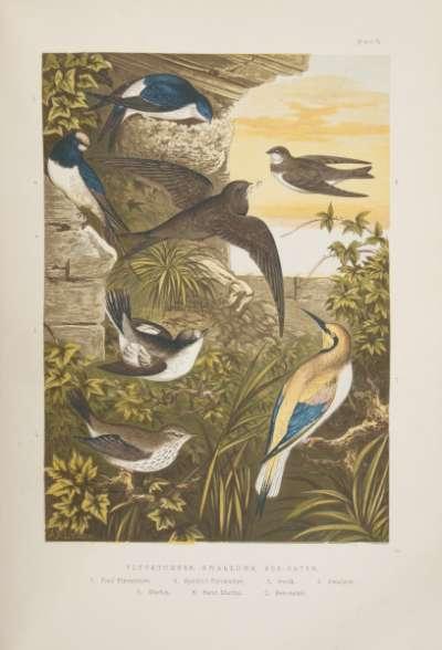 The Smaller British Birds publication