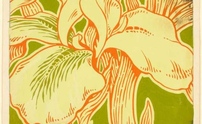 Iris Design