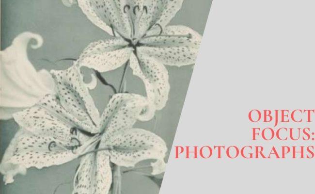 Object Focus: 'Some Japanese Flowers' by Kazumasa Ogawa
