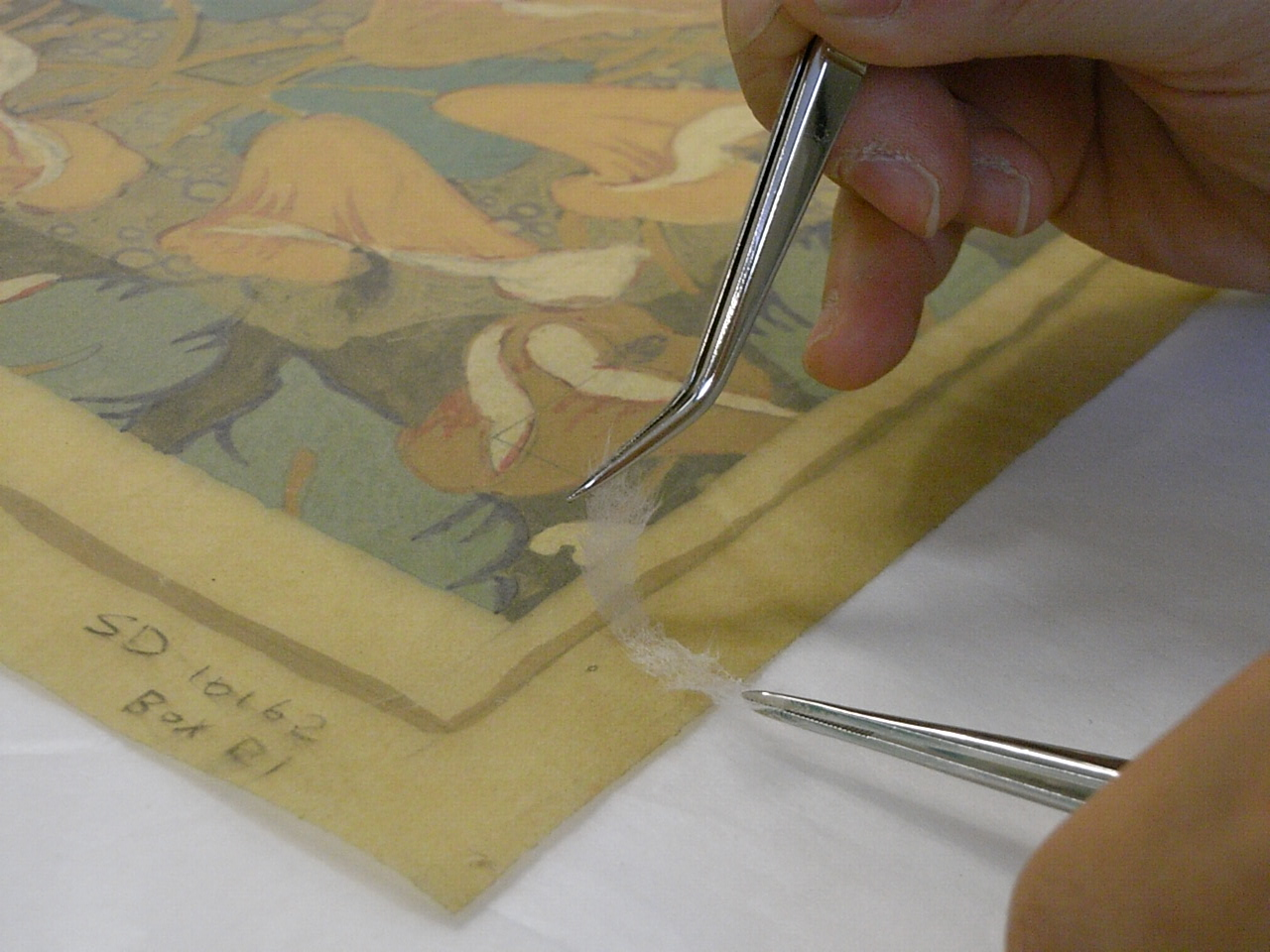 Photo of hands holding tweezers doing conservation work
