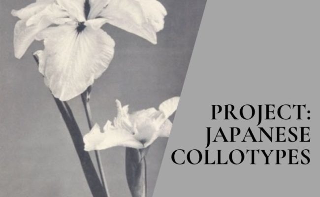 Project: Floral Photographs of Japan